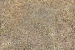 El año pasado cierre de la hierba seca del ` s para arriba Imagen de archivo
