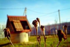 El año pasado flores en el jardín de la primavera Imagenes de archivo
