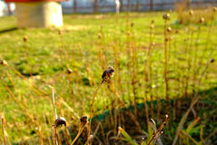 El año pasado flores en el jardín de la primavera Imagen de archivo