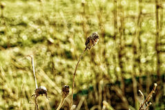 El año pasado flores en el jardín de la primavera Fotografía de archivo