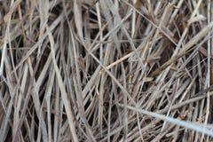 El año pasado hierba del ` s Foto de archivo libre de regalías