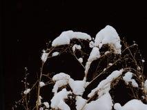 El año pasado hierba del ` s doblada debajo de nieve Imágenes de archivo libres de regalías