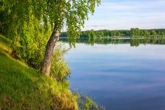 El abedul-árbol delgado que se coloca en el banco del río Imagen de archivo libre de regalías