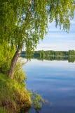 El abedul-árbol delgado que se coloca en el banco del río Fotografía de archivo libre de regalías