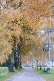 El abedul alineó la trayectoria del otoño en el campo alpino II Fotografía de archivo libre de regalías