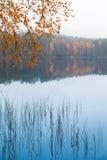 El abedul amarillo del otoño se va sobre el agua inmóvil del lago Foto de archivo libre de regalías