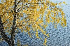 El abedul amarillo se va en un fondo del agua Foto de archivo libre de regalías