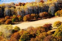 El abedul blanco del otoño en el prado Fotografía de archivo libre de regalías