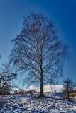 El abedul blanco ramifica en un fondo del cielo azul Fotografía de archivo libre de regalías