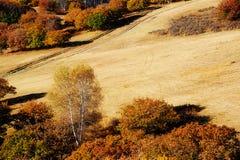 El abedul blanco y la trayectoria del otoño en el prado Foto de archivo