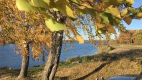 El abedul brillante del otoño se va en una rama que agita en el viento almacen de metraje de vídeo