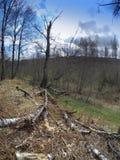 El abedul caido en la madera de la primavera Fotos de archivo libres de regalías