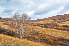 El abedul de plata del otoño Foto de archivo