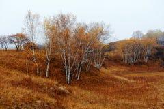 El abedul de plata del otoño en la estepa Imagen de archivo