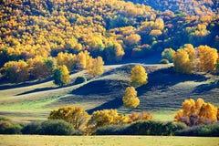 El abedul de plata del otoño en el prado Foto de archivo libre de regalías