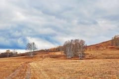 El abedul de plata en el prado Imagen de archivo libre de regalías