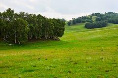 El abedul de plata en el prado Fotografía de archivo