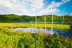 El abedul de plata en la orilla del lago Foto de archivo