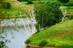 El abedul de plata muerto en orilla del lago Foto de archivo