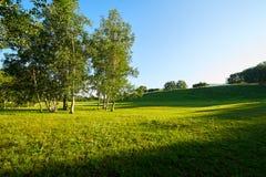 El abedul de plata y la sombra en el prado Imágenes de archivo libres de regalías