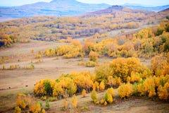 El abedul de plata y las colinas de la caída en los prados Imagen de archivo libre de regalías
