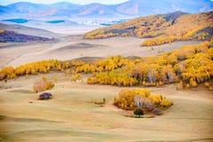 El abedul de plata y las colinas de la caída en el prado Fotos de archivo libres de regalías