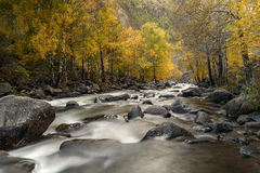 El abedul de río empiedra otoño Fotos de archivo