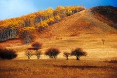El abedul del otoño en la ladera Imagenes de archivo