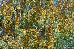 El abedul del otoño se va en un árbol verde verdoso en el parque Fotografía de archivo libre de regalías