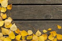 El abedul del otoño se va y las agujas del pino en un fondo de madera Fotos de archivo libres de regalías