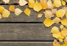 El abedul del otoño se va y las agujas del pino en un fondo de madera Imágenes de archivo libres de regalías