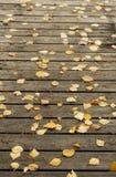 El abedul del otoño se va y las agujas del pino en una terraza de madera oscura Fotografía de archivo libre de regalías