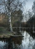 El abedul del paisaje de la primavera se refleja en el agua del lago en el bosque Imagenes de archivo