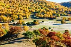 El abedul del wihte del otoño en el pasto Fotos de archivo libres de regalías