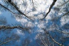El abedul en el cielo Foto de archivo
