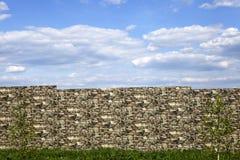 El abedul en el fondo de la pared de ladrillo Foto de archivo