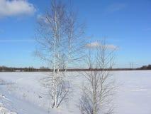 El abedul joven solo se coloca en el campo en invierno Imagen de archivo