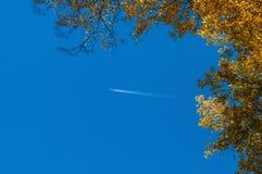 El abedul ramifica cielo del otoño Foto de archivo