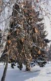 El abedul ramifica con las hojas amarillas secas en un fondo del paisaje del invierno Fotografía de archivo