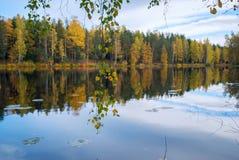El abedul ramifica con las hojas sobre el agua del lago Autumn Landscape Imagenes de archivo