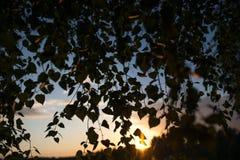 El abedul ramifica contra un fondo del cielo de la tarde con las nubes Fotografía de archivo libre de regalías