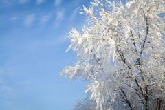 El abedul ramifica en la helada y la nieve en el sol con el fondo del cielo azul Fotos de archivo libres de regalías