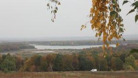 El abedul ramifica en un fondo de un lago del otoño almacen de metraje de vídeo