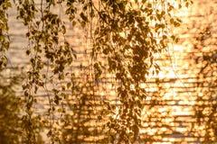 El abedul sale del fondo de la puesta del sol del agua Imágenes de archivo libres de regalías