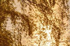 El abedul sale del fondo de la puesta del sol del agua Fotos de archivo