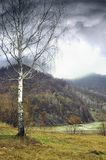 El abedul se coloca en el banco del río contra la perspectiva de las montañas Fotos de archivo