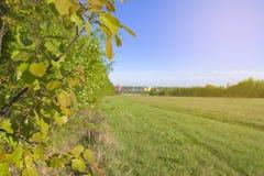 El abedul se va en un fondo del cielo y un campo en la primavera Fondo Foto de archivo