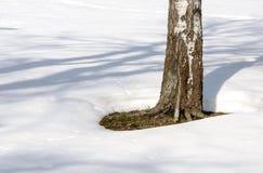 Abedul solo en la nieve deshelada Imágenes de archivo libres de regalías