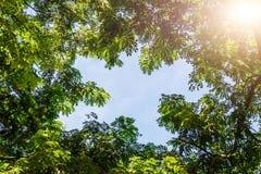 El abedul verde deja el brillo en el sol en el cielo azul Fotografía de archivo libre de regalías