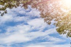 El abedul verde deja el brillo en el sol en el cielo azul Imagen de archivo libre de regalías